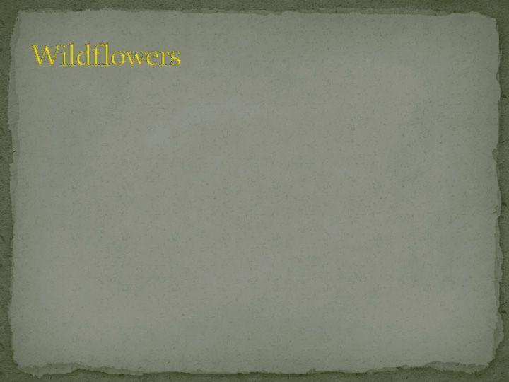 KieshaPreserveSlideShowPage48