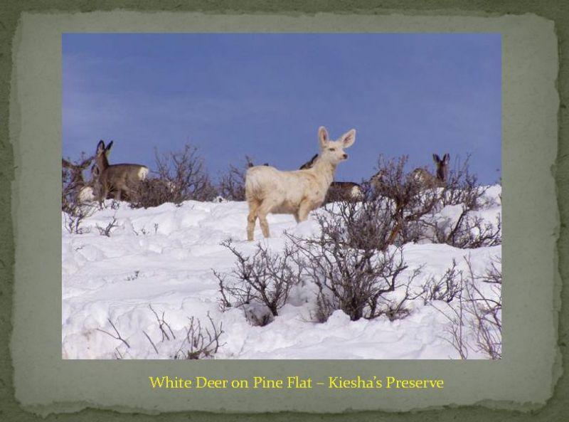 KieshaPreserveSlideShowPage62
