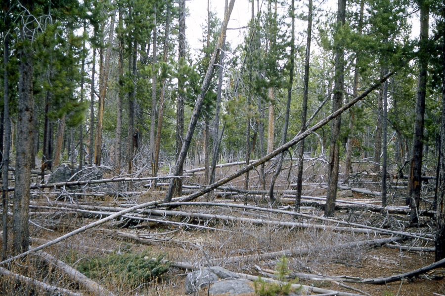 Bridge Creek Forest Management Project
