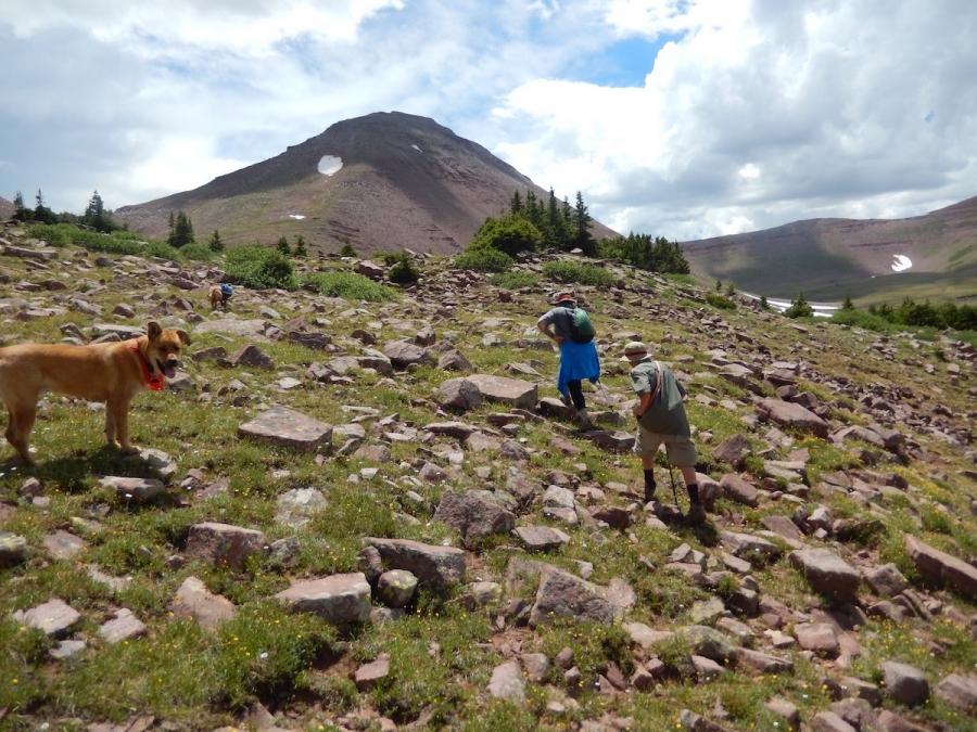 High Uinta Wilderness/Domestic Sheep