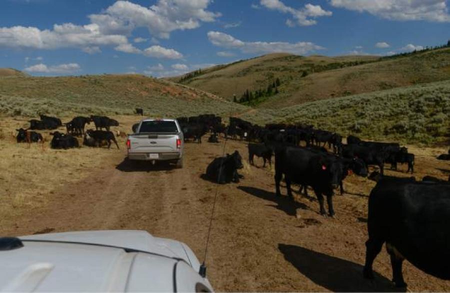 Livestock damaged stream in Rich County. Photo Credits: Salt Lake Tribune