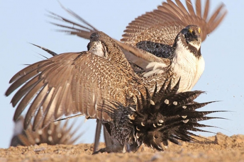 Photo Credit: Sage Grouse Initiative||||