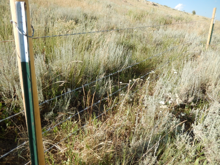 Fence Improvements on Kiesha's Preserve