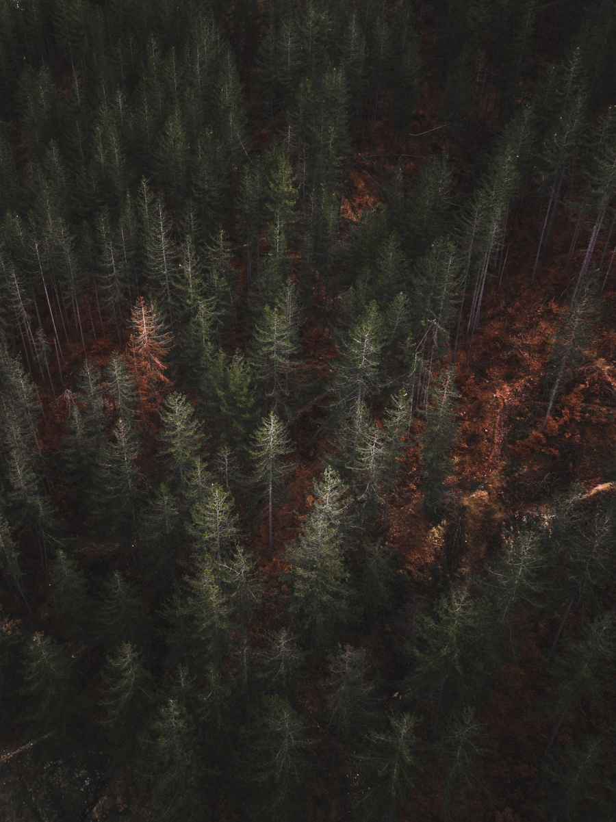 Forest Service's Proposed Directive - NEPA Rule Revision
