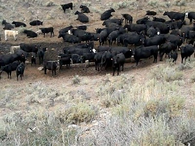 Deseret Land and Livestock